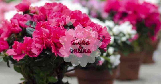 plantas_9_dicas_online