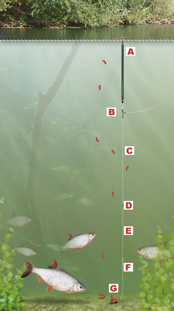 Simple waggler rig to catch fish overdepth