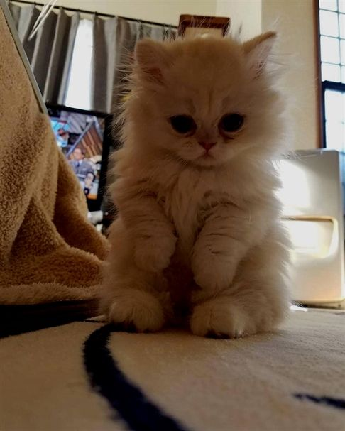 Adorable Cats Animals In 2020 Kitten Pictures Kittens