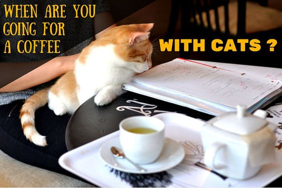 Cat Cafe Warsaw - a great place for cat lovers!  Read more here: http://www.thealternativetravelguide.com/2016/07/11/when-are-you-going-for-a-coffee-with-cats-cat-cafe-warsaw/