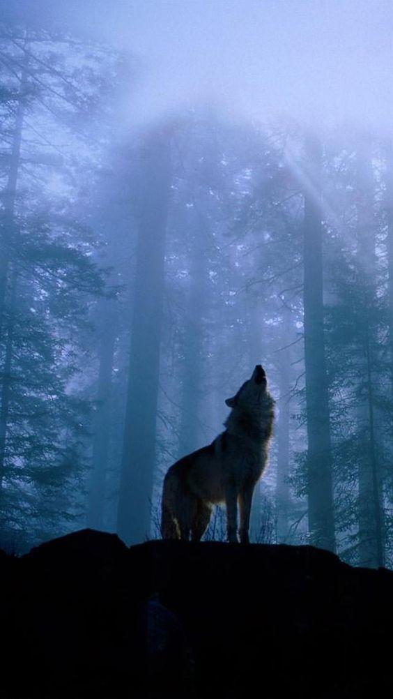 twilightfoggyforestwolfhowliphone6wallpaper