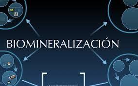 biomineralización - Búsqueda de Google
