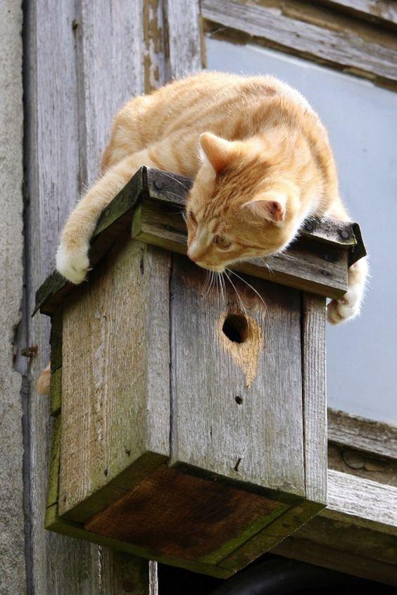 Catcrophobia Cat Training I Love Cats Cats