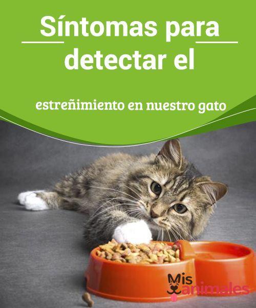 Síntomas Para Detectar El Estreñimiento En Nuestro Gato Para Detectar El Estreñimiento En Nuestro Gato Hay Dife Enfermedades De Gatos Gatos Animal Doméstico