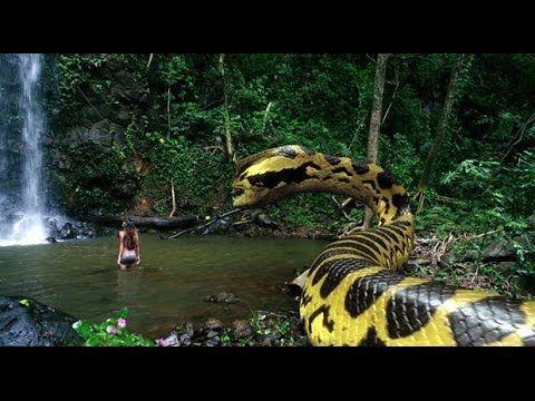 Anaconda 4 Filme Completo Youtube World Biggest Snake Anaconda Anaconda Movie
