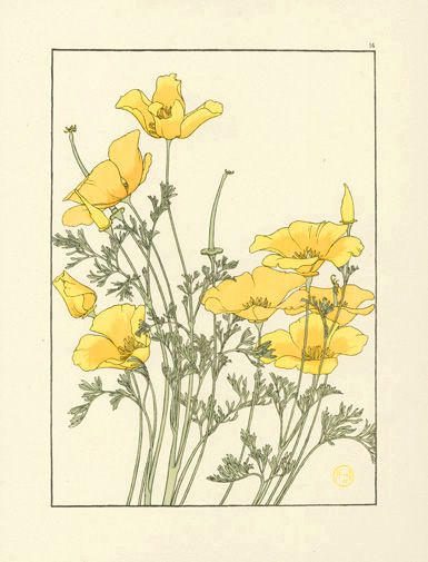 Cas language and flower meanings on pinterest - Yellow poppy flower meaning ...