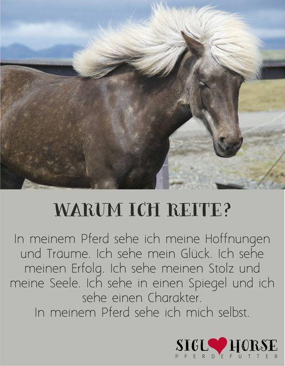 Warum ich reite... #Pferd # reiten | Pferde ...