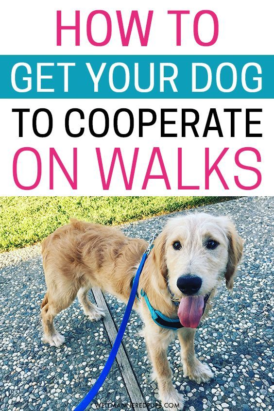 How To Get Your Dog To Cooperate On Walks Training Your Dog Dog