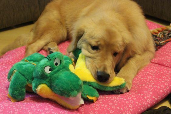 Haia e seu crocodilo!