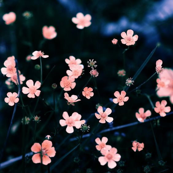 little dream by JunJun510