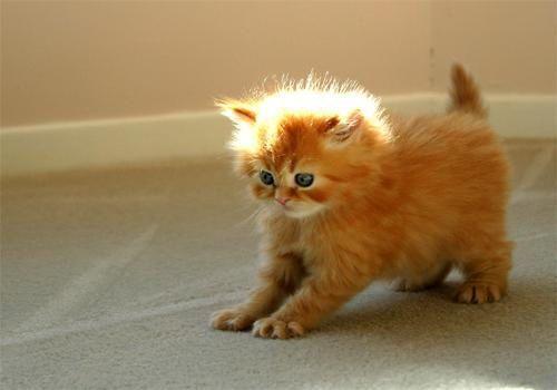 The Cats of Evandra's House F77068a79147295e576212a3899ca20e