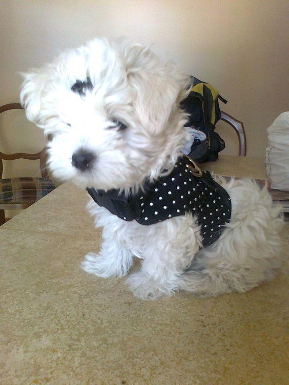 Nina la nueva mascota de la familia