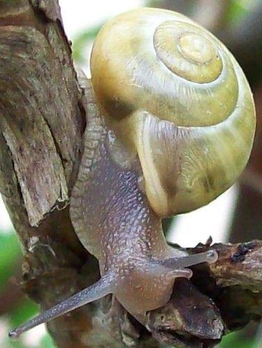 scargot-Mini02