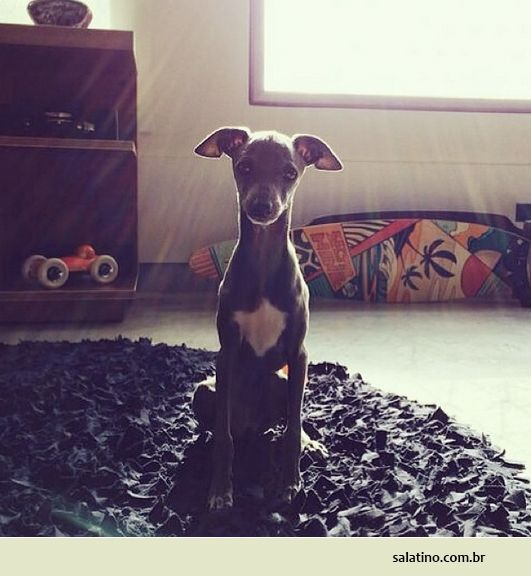 Perfect Puppy Frame. #dog #salatino #clubesalatino #canil #perro #dogs #cute #love #nature #animales #dog #ilovemydog #ilovemypet #cute #galgos #greyhound #galgoespanhol #galgo