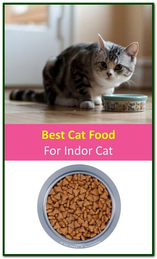 Best Cat Food For Indoor Cats Best Cat Food Cat Food Science Diet Cat Food