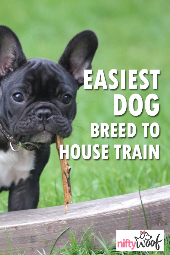 Which Dog Are The Easiest To House Train Check Out This Post