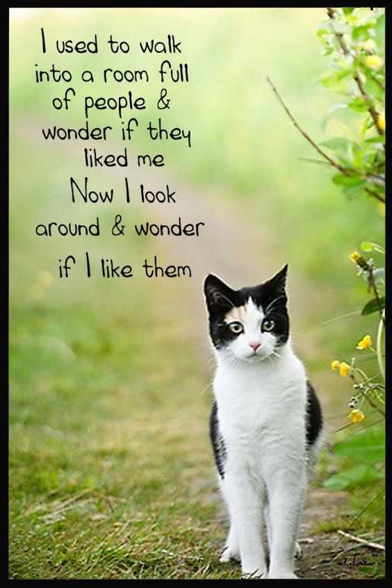 I used to walk into a room full of people and wonder if they liked me. Now I look around and I wonder if I like them.
