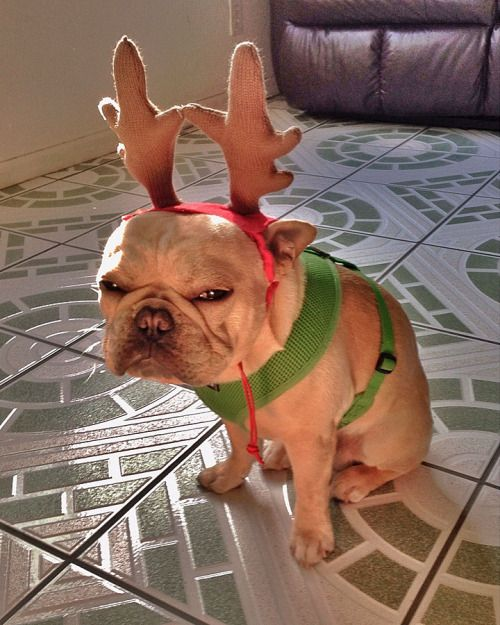 14 Pups Who Have Nailed Their Reindeer Auditions