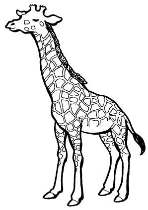 Giraffe Ausmalbild Giraffenzeichnung Ausmalbilder Tiere Bilder Zum Ausmalen Fur Kinder