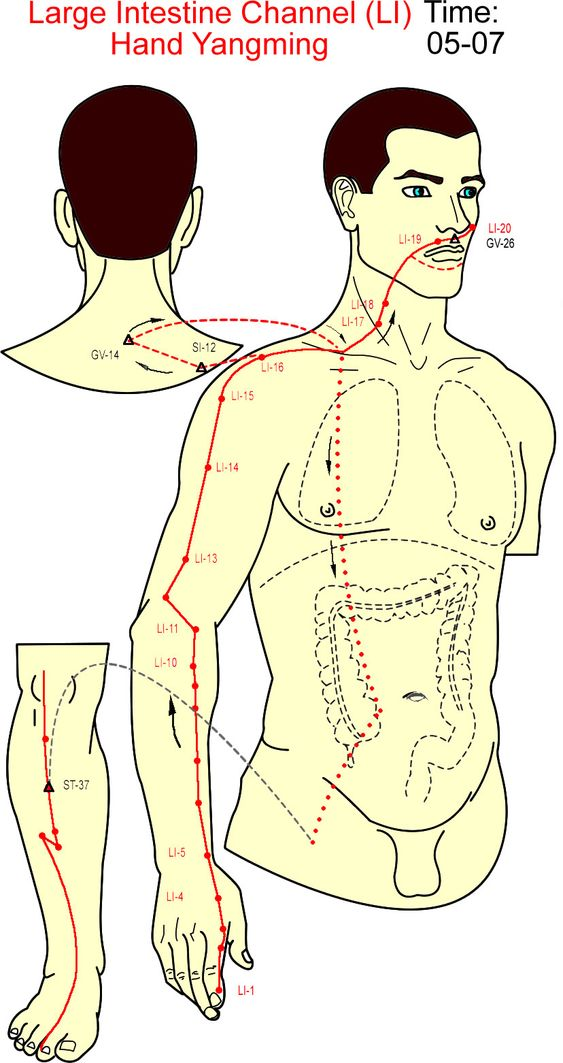 gall bladder acupuncture meridian traces out the shape of liver gall bladder…
