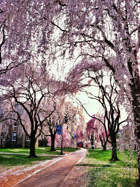 Bryn Mawr College in Pennsylvania during a truly epic Spring season