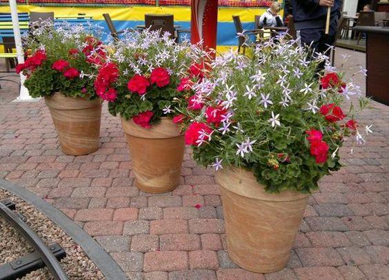 Kwiaty Na Balkon I Taras Ciekawe Kompozycje W Donicach I Skrzynkach Container Gardening Flowers Plants