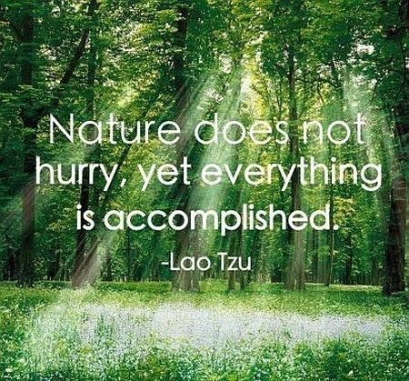 Accomplishment, Lao Tzu, Nature. Nature doesn't hurry, yet everything is accomplished. - Lao Tzu > Inspirational Quotes with Pictures.
