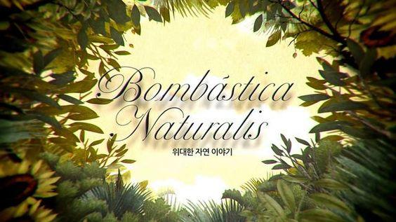 Bombástica Naturalis, escrito e ilustrado por Iban Barrenetxea, impulsada por la Fundación CJ de Corea del Sur