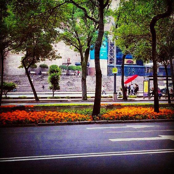 "isa_viramontes: ""Me encanta!!!!! #cdmx #tour #october #2015년 #streetphotography #architecture #flowers #flowerstagram #colors #colorfull #likesfortags #likesreturned #like4like #likeback #likeforlike #follow4follow #followback #likesforfollow #lovephotography  """