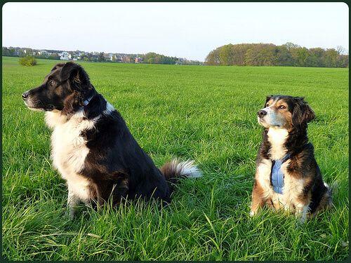 5 Notsignale Bei Hunden Hunde Hundehaltung Und Tiere