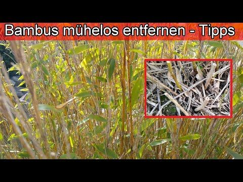 Pin Auf Garten Unkraut Schnecken Blattlause