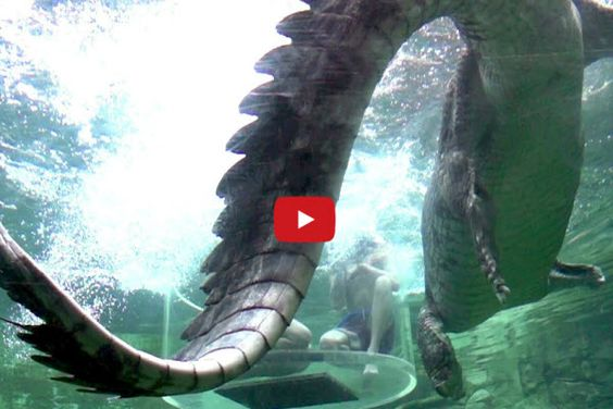 I Guarantee You Have Never Seen Crocodiles Like THIS Before! AMAZING!!!