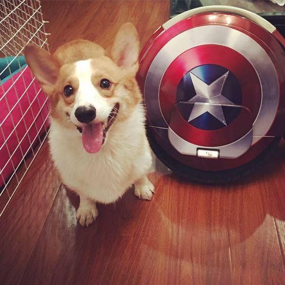 Captain America Corgi