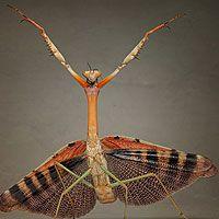 Fotógrafo mostra insetos como alienígenas