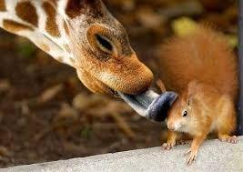 Bildergebnis für animals love