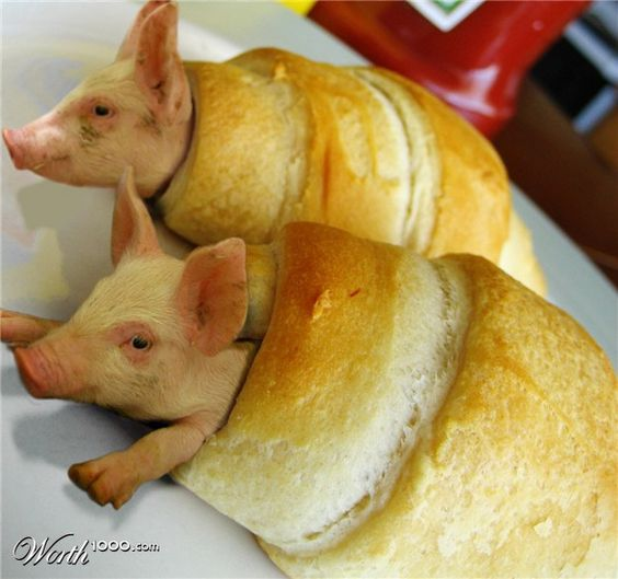 Pigs In A Blanket | Pets I love to see | Pinterest | Words, Blankets ...