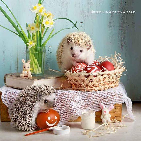 Happy Easter! Frohe Ostern! Feliz Páscoa! - null