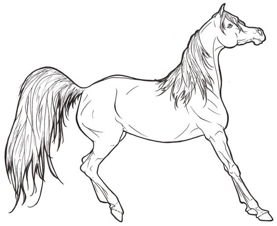 arabianhorse pictures to color | Arabian Horse Lineart by ...