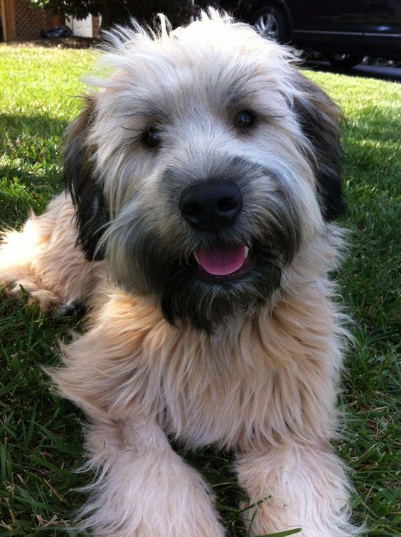 "Beautiful And Cute York Terrier Dog: ""Stella Bella"
