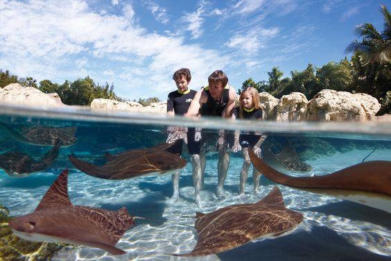 Rising Tide Conservation