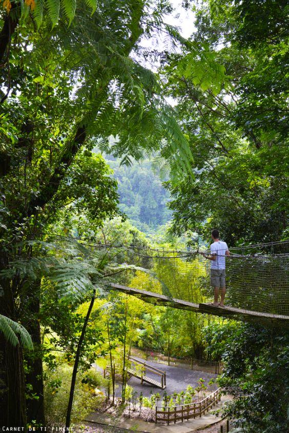 Martinique - Jardin de Balata