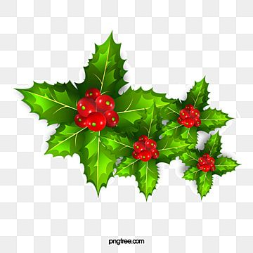 Christmas Green Holly Decoration Pattern Mistletoe Clipart Christmas Merry Christmas Png Transparent Clipart Image And Psd File For Free Download Green Christmas Tree Decorations Green Christmas Decorations Merry Christmas Decoration