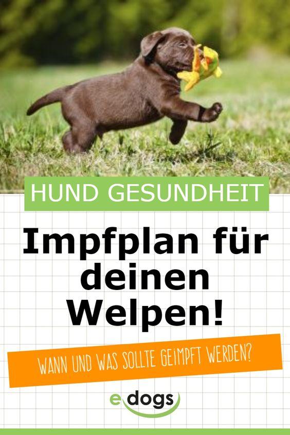 Wann Muss Mein Hund Geimpft Werden Edogs Magazin Welpen Hunde Hunde Erziehen