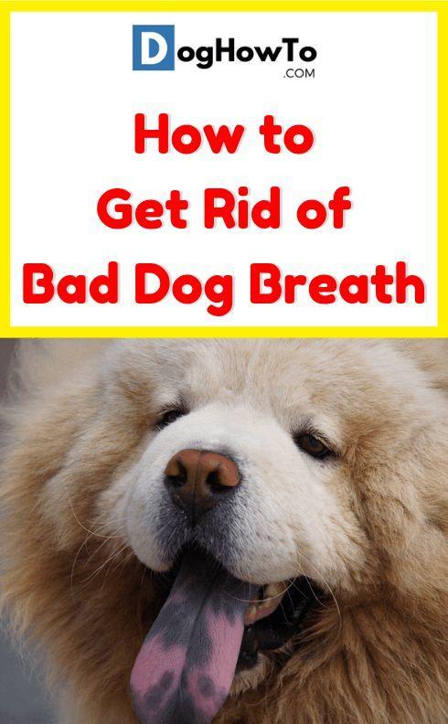 How To Get Rid Of Bad Dog Breath Bad Dog Breath Dog Bad Breath Remedy Bad Dog
