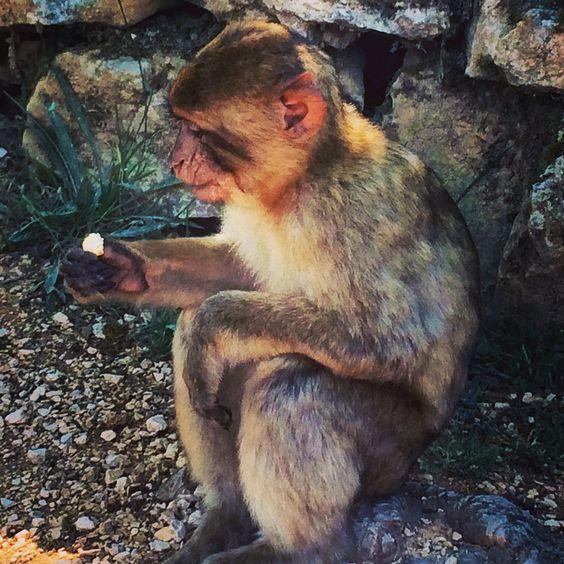 Magic monkey Rocamadour