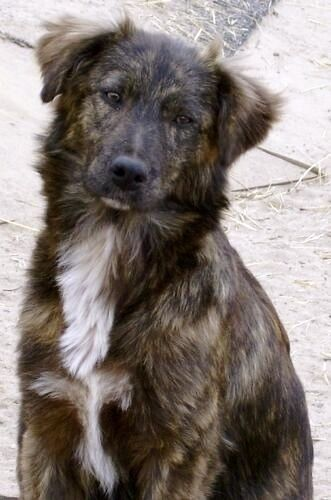 Mutts are the best and often prettier than purebreds. This baby is precious.
