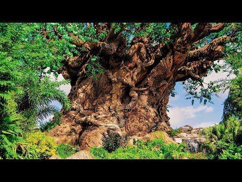 Animal Kingdom Tree Of Life Bgm Loop Youtube Animal Kingdom Disney Animal Kingdom Park Disney World