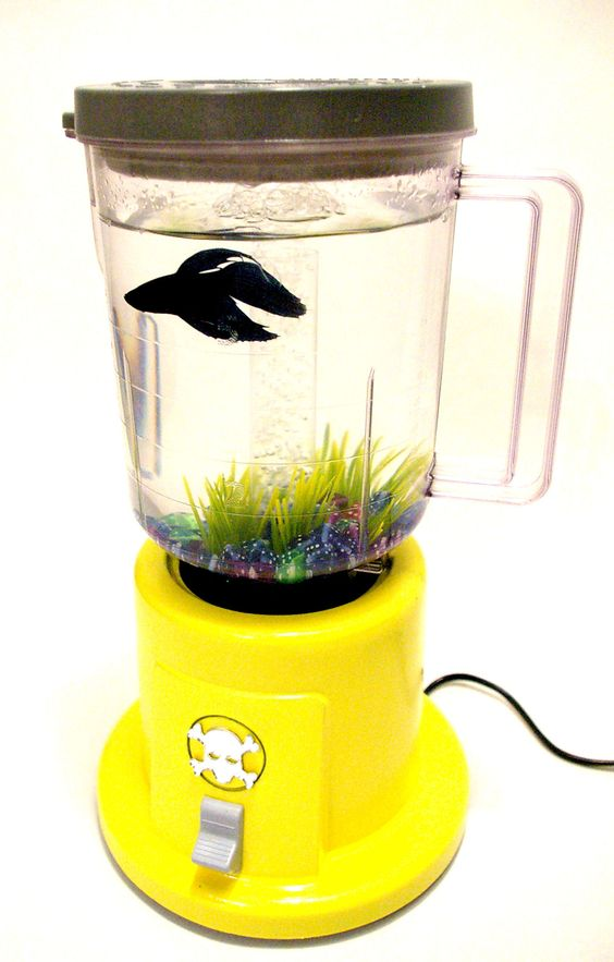 Betta blender fish tank betta pinterest fish for Fish in a blender