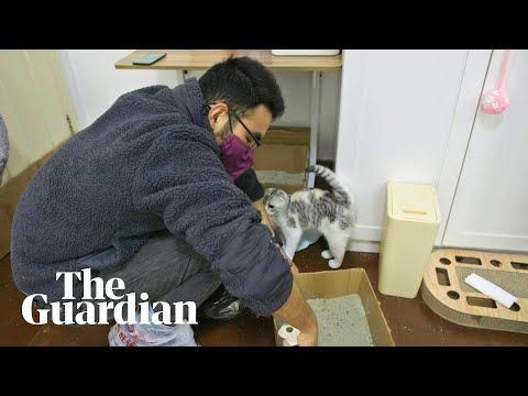 Ye Jialin Has Been Looking After The Pets Of Residents Who Are Unable To Return Home In 2020 Cats Animals Friendship Cat Memes