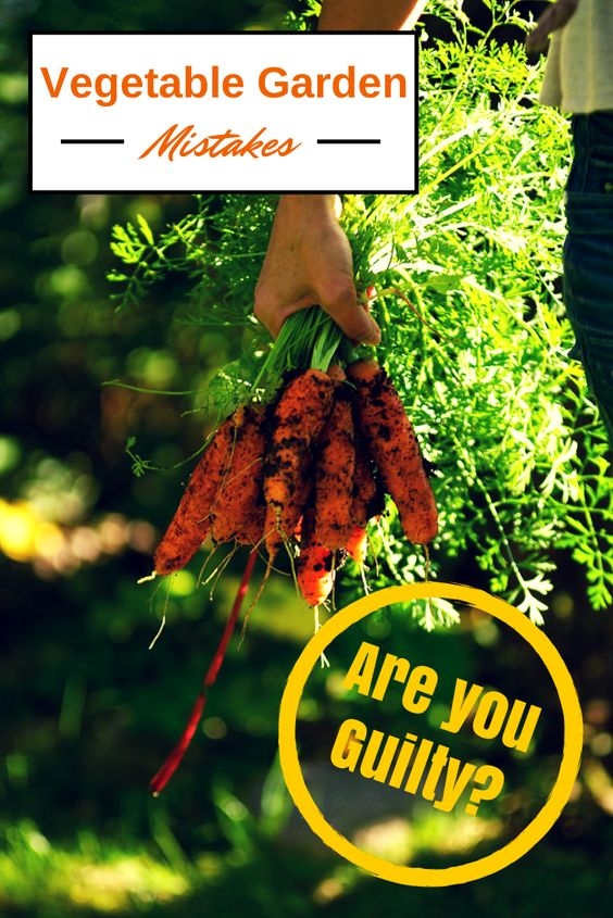 Are You Making These Vegetable Gardening Mistakes?